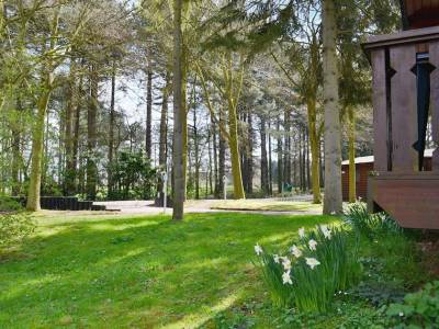 Set in mature woodland